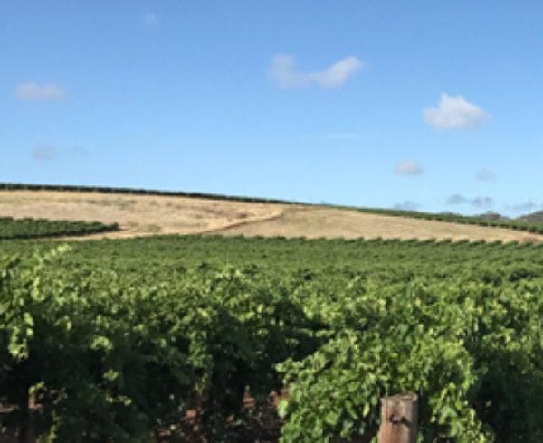 Hemera estate single vineyard shiraz